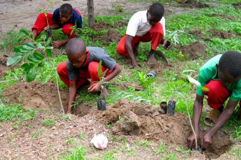 Green Logistics - Tree Planting Project